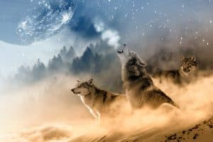 Keep-the-Wolves-From-Your-Door